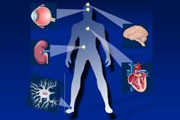 Диапромин сокращает риск развития осложнений диабета.