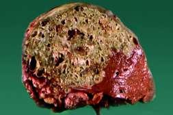 Эффект Ашвамина в быстрой регенерации поврежденных тканей.