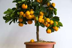 Окупаемость упаковки фруктов Agronova 3 месяца.