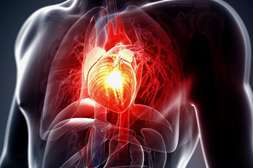 Фитонорм благотворно сказывается на состоянии сердца, сосудов мозга.