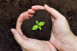 Агросев био обогащает почву.