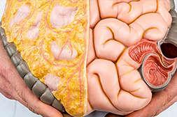 Состав Slimagic тормозит отложение жиров.